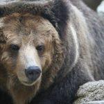 居飛車穴熊vs原始中飛車~穴熊の暴力編~